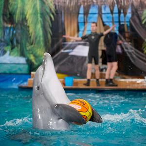 Дельфинарии, океанариумы Новоалександровской