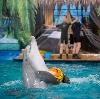 Дельфинарии, океанариумы в Новоалександровской
